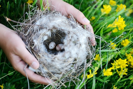 reproduction: Bird nest with eggs Stock Photo