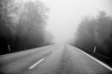 mystical forest: Road in fog