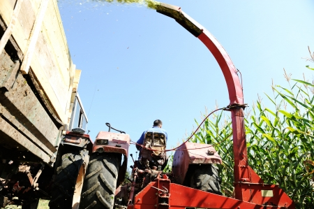 Harvesting corn photo