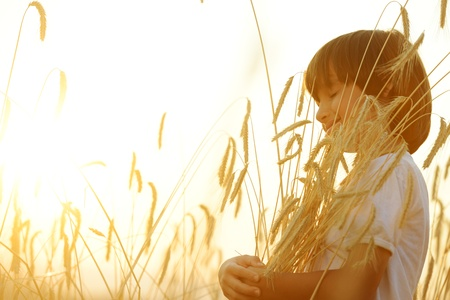 Kid at wheat field hugging harvest grain