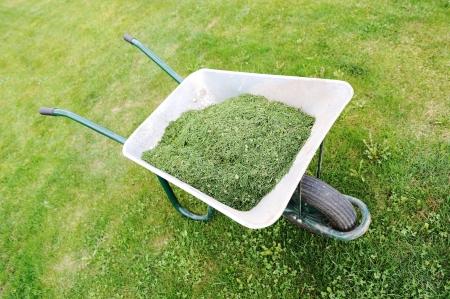 Gardening season - green grass with wheelbarrow photo