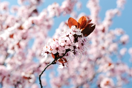 Flower blossom in spring photo