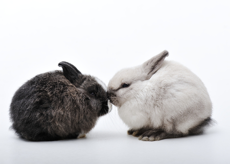 fluffy ears: Little two rabbits on white