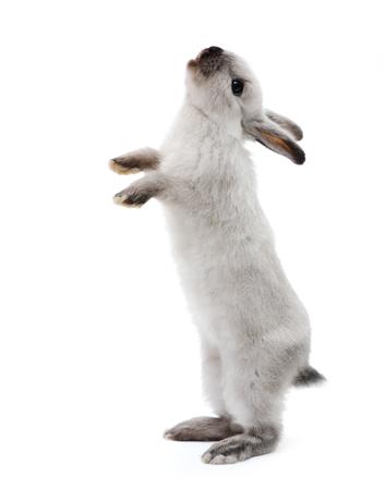 白のルックアップにウサギのウサギします。