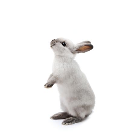 白い小さなウサギ 写真素材