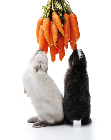 decoy: Little bunny rabbits on white Stock Photo