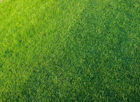 lawn: Golf Courses green lawn Stock Photo