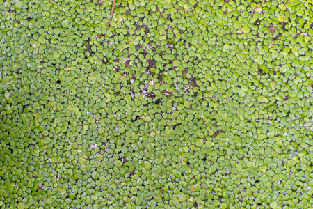rive: Swamp rive water float surface Stock Photo