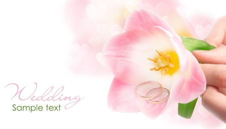 two rings in pink tulip Stock Photo