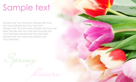 white day: Tulip flowers postcard concept  Stock Photo