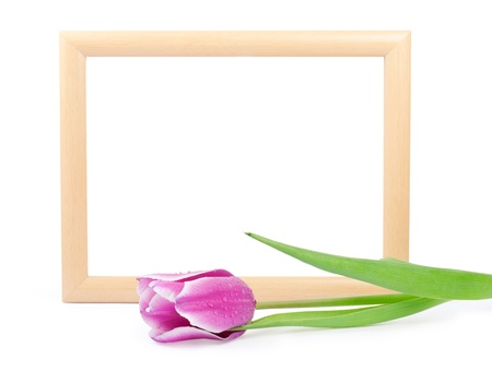 frame with tulip isolated on white  photo