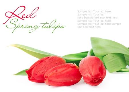 beautiful red tulips close up: DSC_3466 êîïèÿ(1).jpg