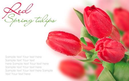beautiful red tulips close up: DSC_3458 �����(1).jpg