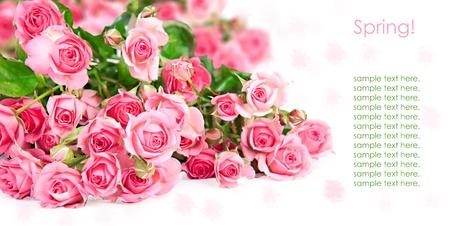 Pink roses postcard design 1(1).jpg photo