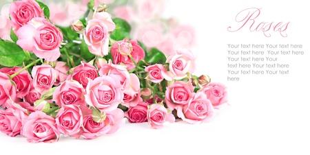 Pink roses postcard design 7(1).jpg Stock Photo