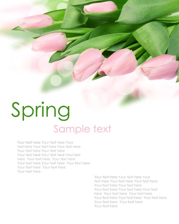 pink and green: tulip flowers isolated on white 4(2).jpg Stock Photo