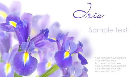 iris fiore: DSC_2190 (2). Jpg Archivio Fotografico