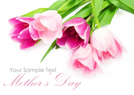 Fresh spring tulip flowers isolated on white photo