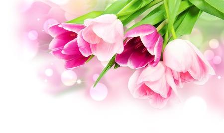 Fresh spring tulip flowers isolated on white Stock Photo