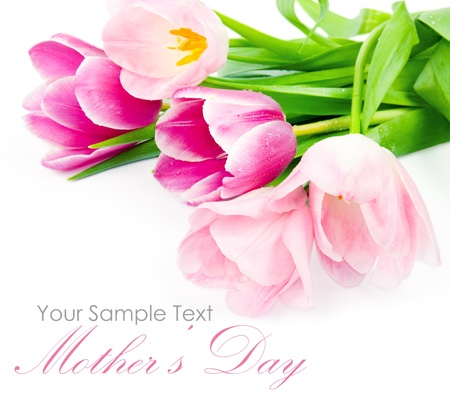family day: Fresh spring tulip flowers isolated on white Stock Photo
