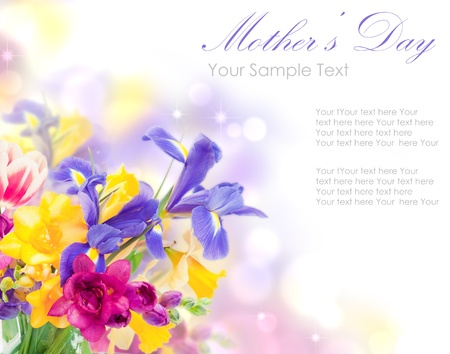 womens day: Fresh spring iris flowers idolated on white Stock Photo