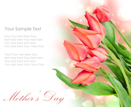 Fresh spring tulip flowers isolated on white photo