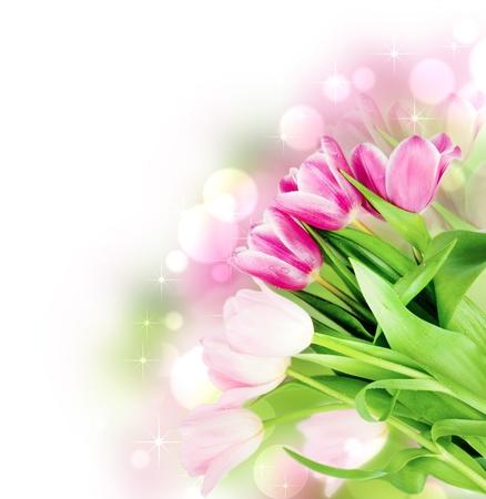 dzień matki: Świeże kwiaty tulipan, wiosna na białym