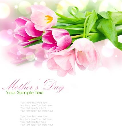 dzień matki: Åšwieże kwiaty tulipan, wiosna na biaÅ'ym Zdjęcie Seryjne