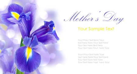 Fresh spring iris flowers idolated on white Stock Photo