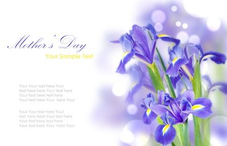 Fresh spring iris flowers idolated on white Stock Photo - 17936844