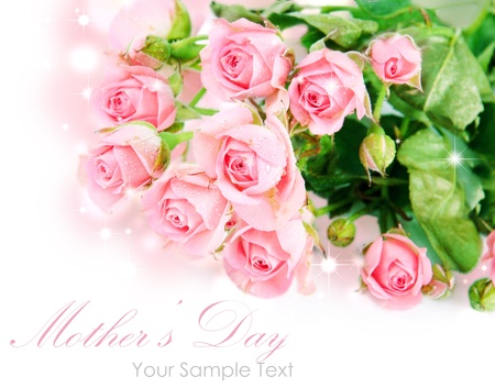 Tender pink roses isolated on white Stock Photo