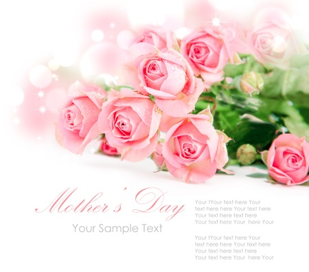 Tender pink roses isolated on white photo