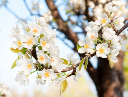 Fresh spring flowers Stock Photo - 17936841