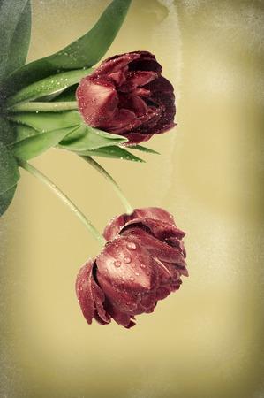 Dark vintage tulip flowers on old-fashioned paper background