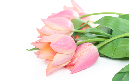 Fresh spring tulip flowers could be used as a postcard design or journal illustration
