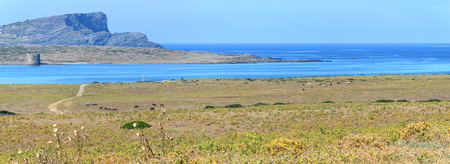 Ultra wide panorama: turquoise water between the Asinara National Park and the Tower of Isola Piana Island with Capo Falcone Cape on background, Sardinia, Italy Archivio Fotografico - 110838754