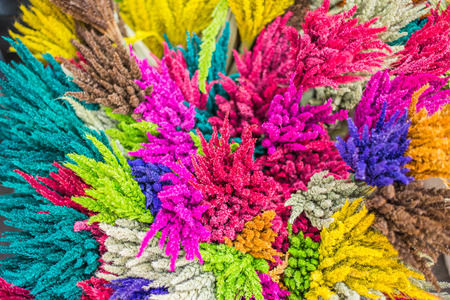 bright colors: the color of rice straw Stock Photo