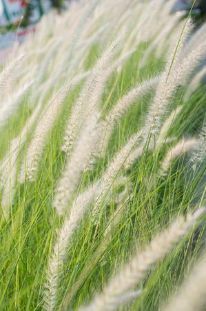 perianth: Grass flower