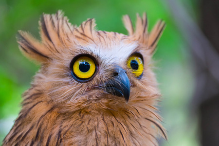 rear end: The Owl