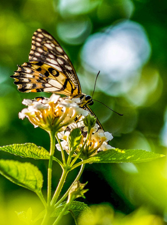 hot wings: butterfly and flower in spring