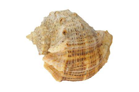 Sea shell - isolato Archivio Fotografico - 6389689