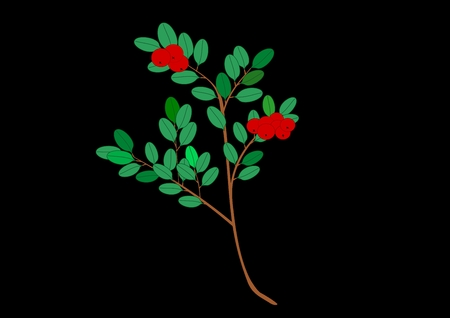 Cranberry illustration Illustration