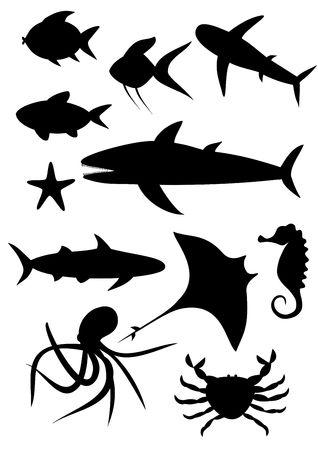 Sealife Stock Photo - 6469483