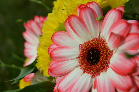 closeups: Pink and yellow flowers Stock Photo
