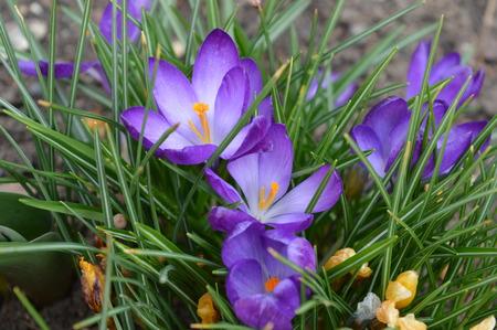 grass beautiful: blue flower