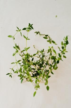 herbs de provence: bunch of thyme Stock Photo
