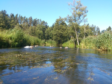 wildness: river Stock Photo