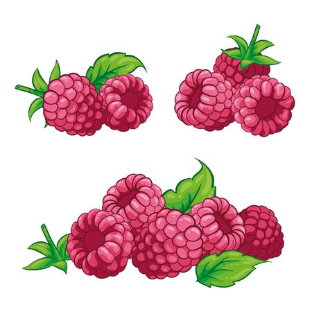 Raspberry illustration. Vector. Group raspberries with leaves. Hand drawn. Isolated on white background.
