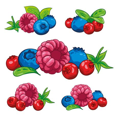 Berry berries Illustration hand draw vector. Group of Cranberry, blueberry, leaves, berries, raspberry, blackberry collection. Isolated on white background. Berry fruits.