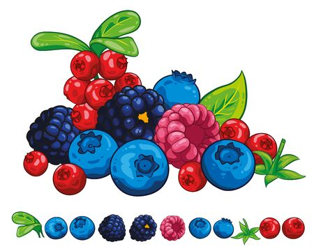 Berry berries Illustration hand draw vector. Group of blueberry, leaves, berries, raspberry, blackberry collection. Isolated on white background. Berry fruits. Çizim